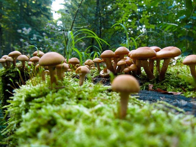 mushrooms-57856_640