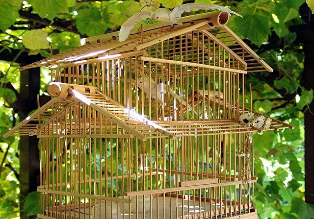 birdcage-213139_640